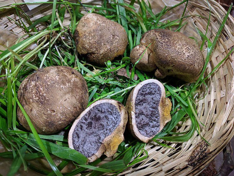 potatofungus