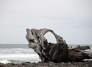 320px-Driftwood.jpg
