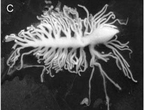 liquidworm
