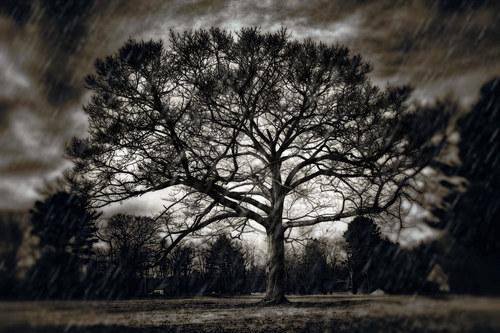 TreeofGoodAndEvil